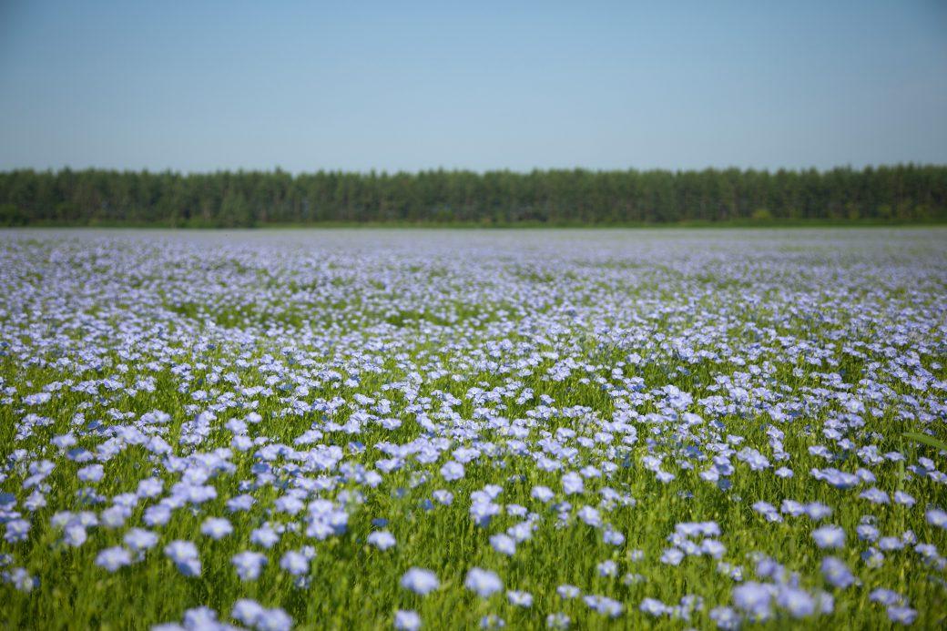 OFF SEASON] Flax Flower Field Morning Photo Tour , SLOW LIFE